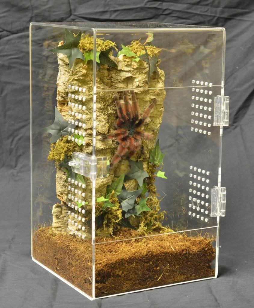 Image by Pathara Buranadilok on Tarantula & Terrarium