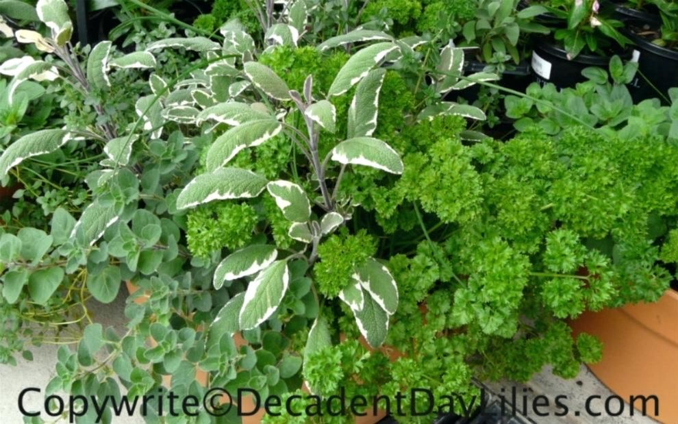 Image result for fresh herbs Container herb garden