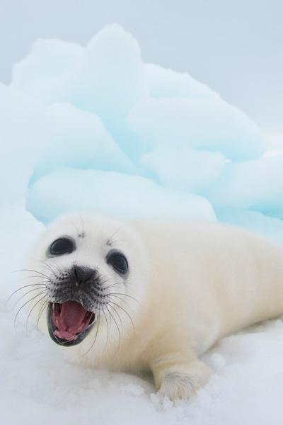 http://www.youtube.com/user/MySuperCuteAnimals | Seal pup ...