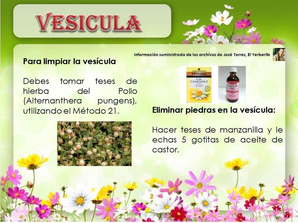 planta medicinal para piedras en la vesicula