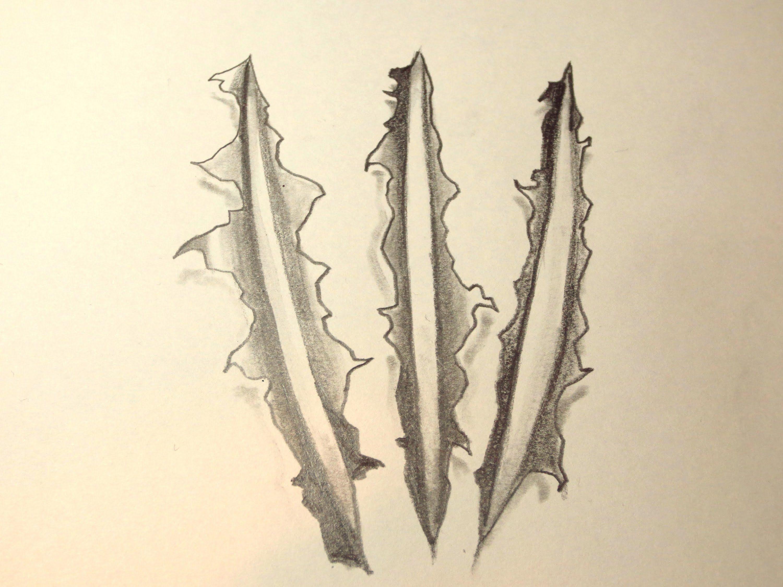Claw Tattoo How To Draw Wolverine Wolverine Tattoo Marvel Tattoos