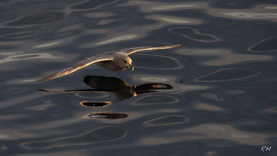 Nature Photo Blog - Roy Mangersnes - Ocean Horse