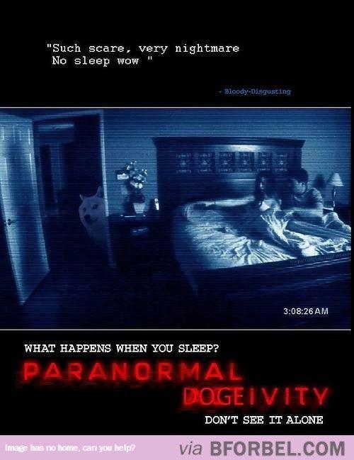 Paranormal Dogevity…