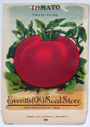 1910/'s TOMATO DWARF STONE LITHO SEED PACKET INDIANAPOLIS,IND EVERITT/'S SEED