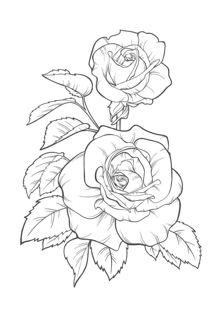 Discover ideas about Flower Drawings