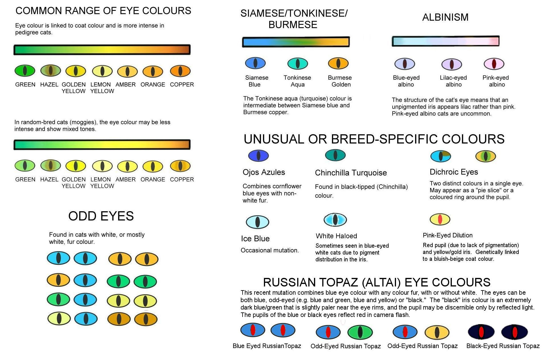 Colour and pattern charts cat eye colors eye color cat