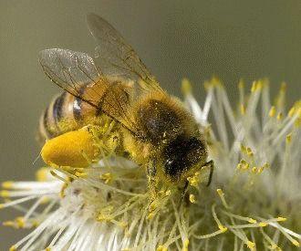 albine din varicoză