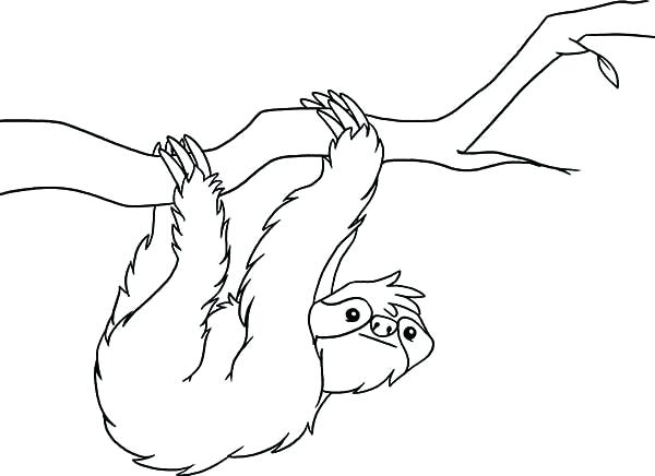 Sloth Coloring Page Free Coloring Page Template Printing Printable Sloth Coloring Pages For Kids S Jungle Coloring Pages Animal Coloring Pages Animal Outline