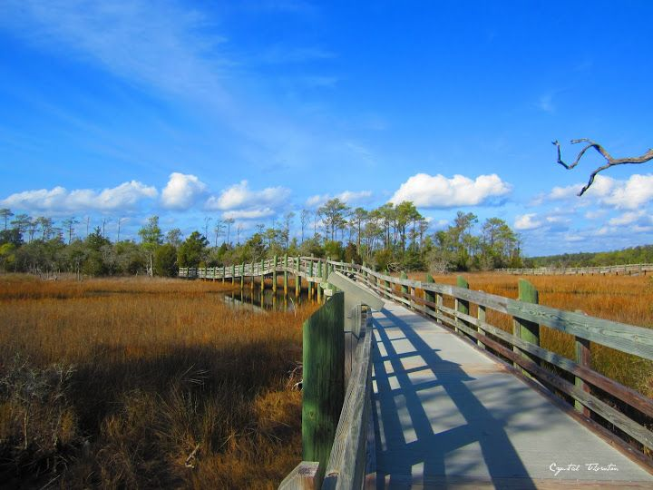 Croatan National Forest Camping