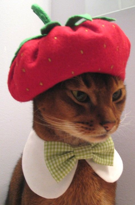 49eacf9feaf strawberry cat beret - perfect for Oliver!