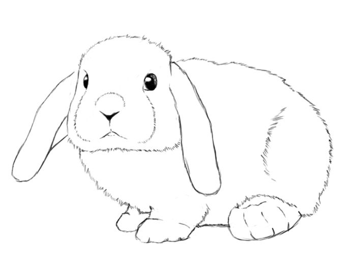 How To Draw A Bunny Step By Step Easter Bunny Drawing Rabbit