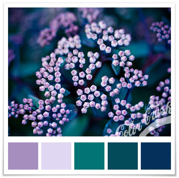 Purple Colour Scheme: It Isn't Peacock, But This Purple, Teal, And Navy Combo