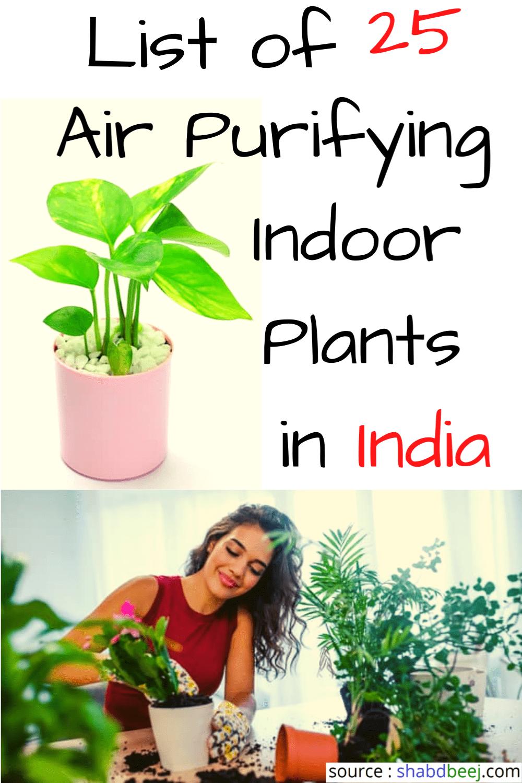 हवा शुद्ध करने वाले 25 पौधे घर में लगायें Hawa Shudh