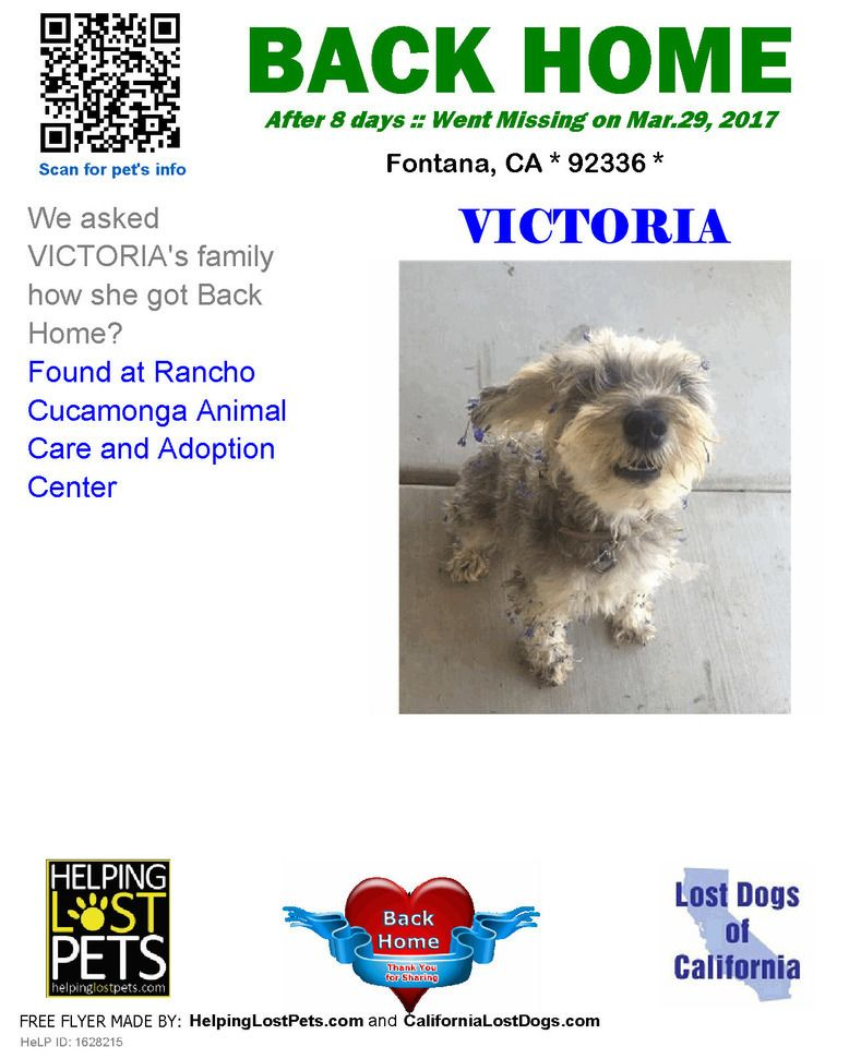 We Are Very Happy To Report Victoria Is Back Home After 8 Days Found At Rancho Cucamonga Animal Care And Adoptio Losing A Dog Losing A Pet Pet Care