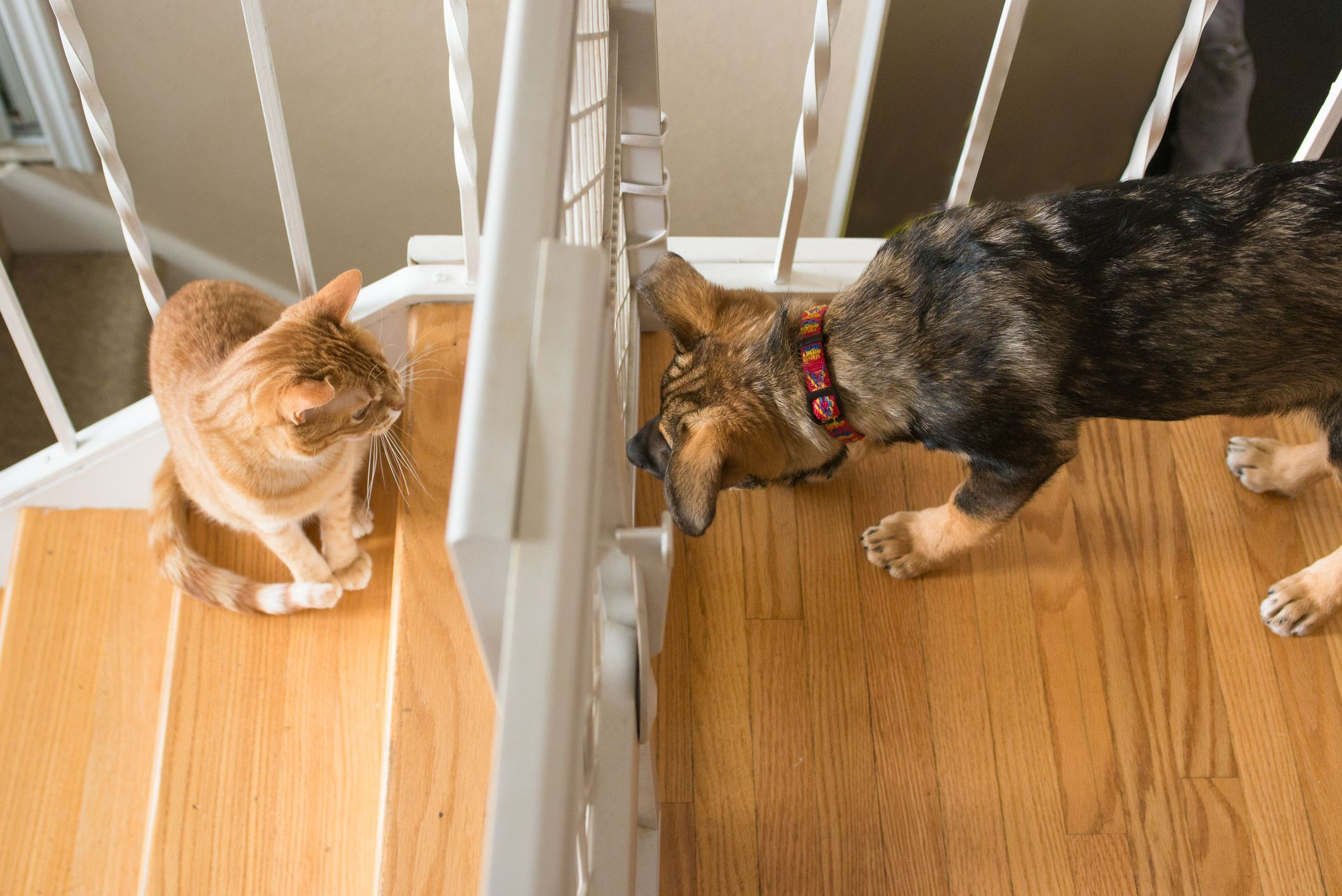 Can cats and dogs get along learn how to properly
