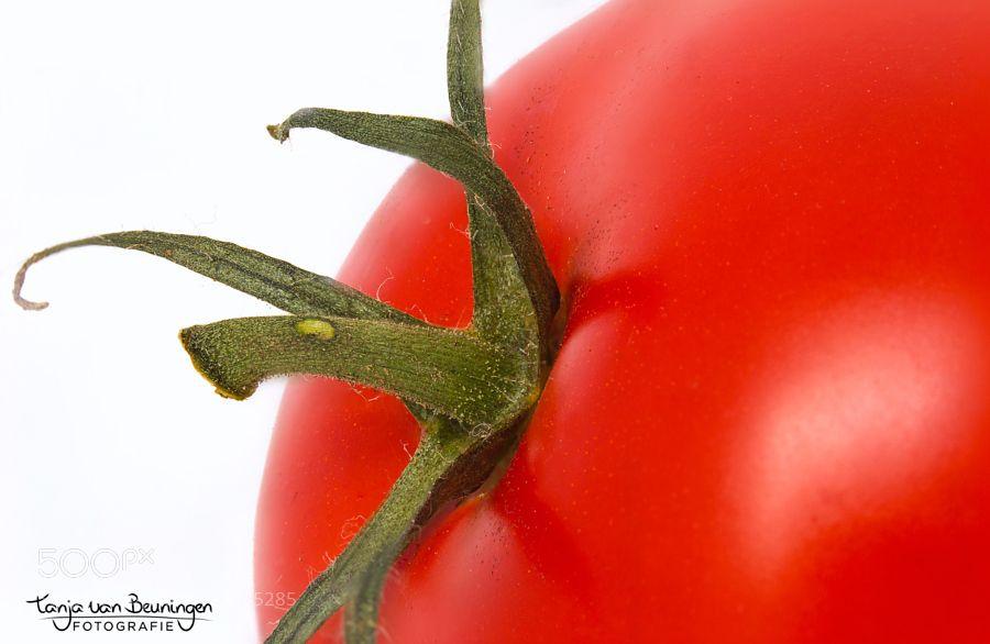 Tomato by jematari