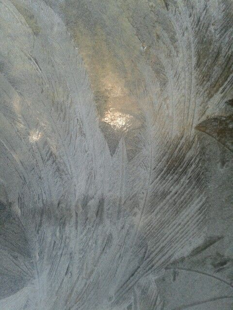 Frost fern