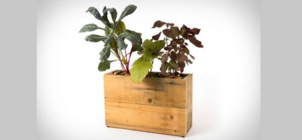 Una maceta inteligente cuidará a tus plantas por ti | indio.com.mx