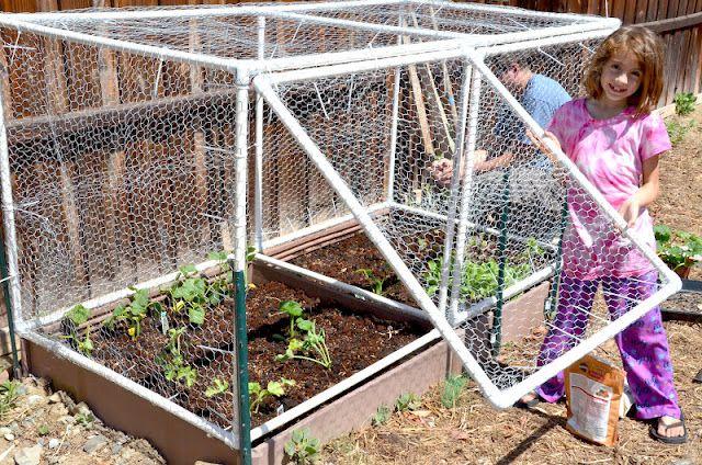 Square Foot Garden Hinged Door Cage Vegetable Garden Design