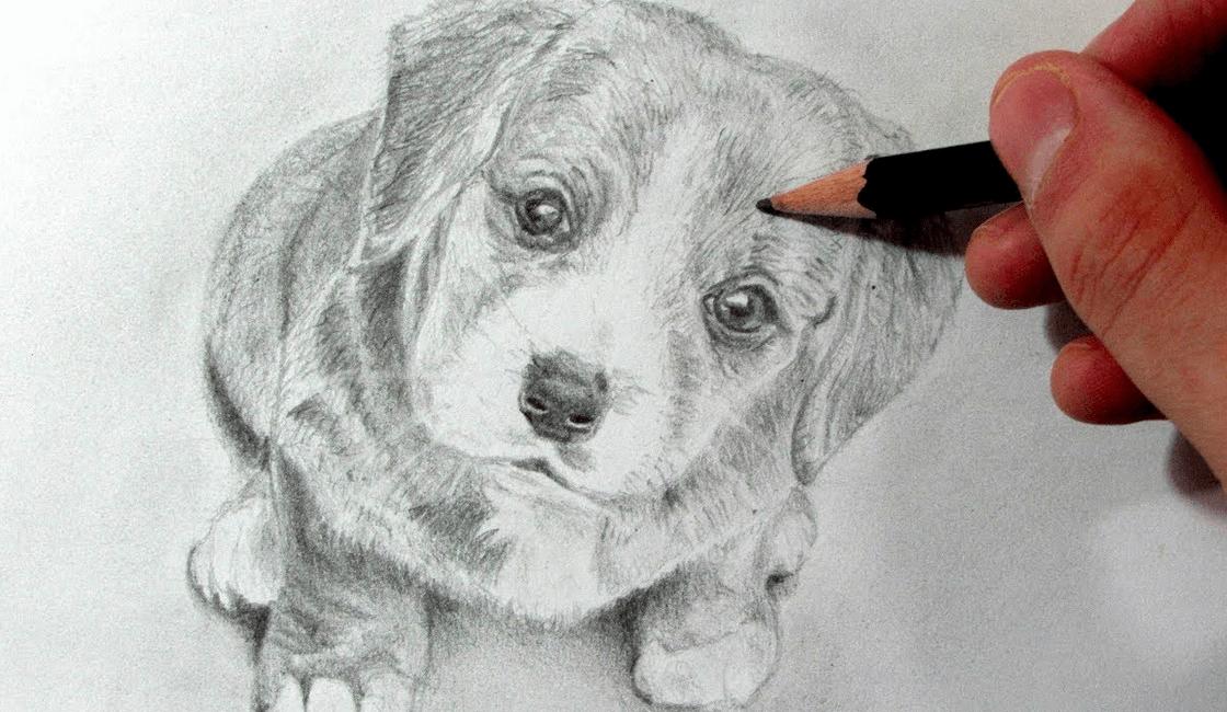 10 Tecnicas De Dibujo Artistico A Lapiz Faciles De Dibujar Para Principiantes Dibujos Artisticos A Lapiz Como Dibujar Un Perro Dibujos Artisticos