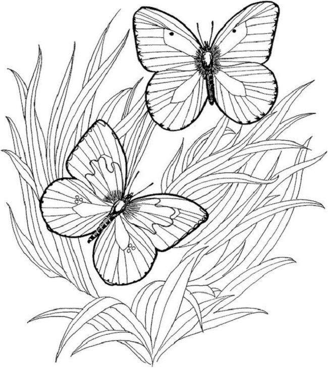 online coloring pages for adults   coloring Pages   Pinterest ...