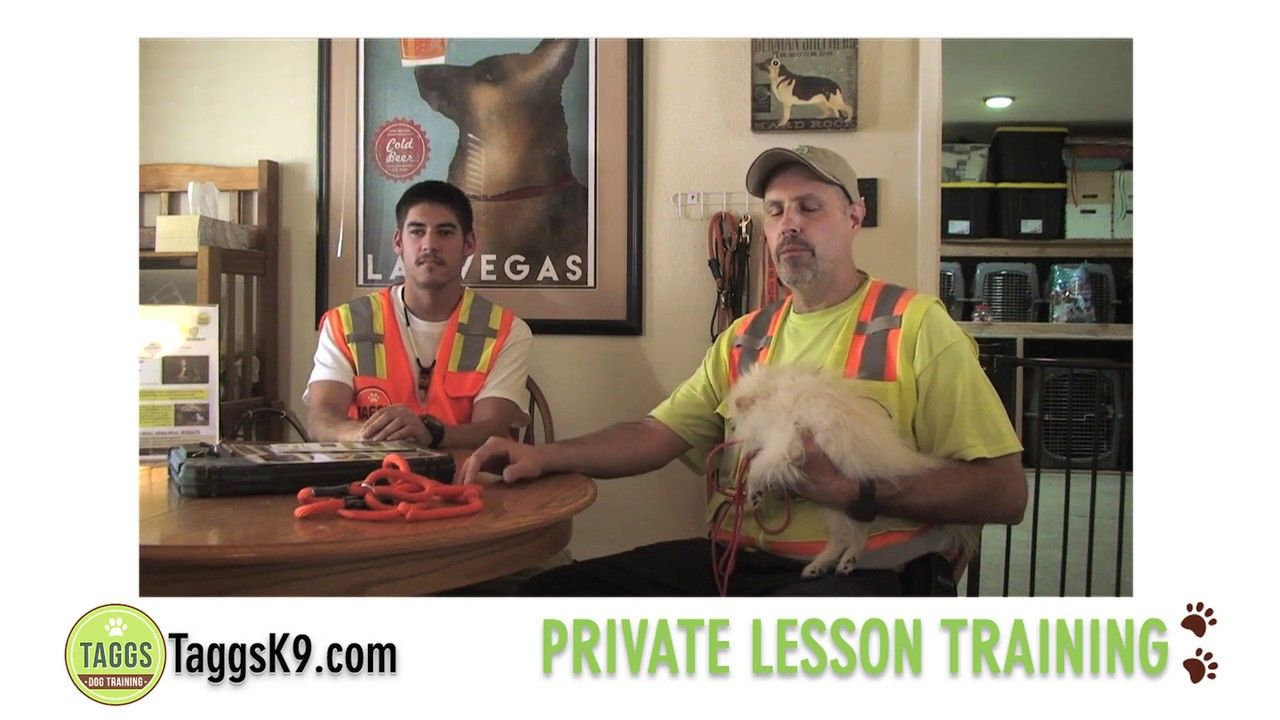 Taggs K9 Private Dog Training Lessons In Las Vegas Focus On Your
