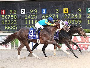 Undefeated Ocho Ocho Ocho, one of several Southern California shippers in the field, outfought Mr. Z through the drive to capture the $1 million Delta Downs Jackpot (gr. III) by a nose at Delta Downs Racetrack Nov. 22, 2014.