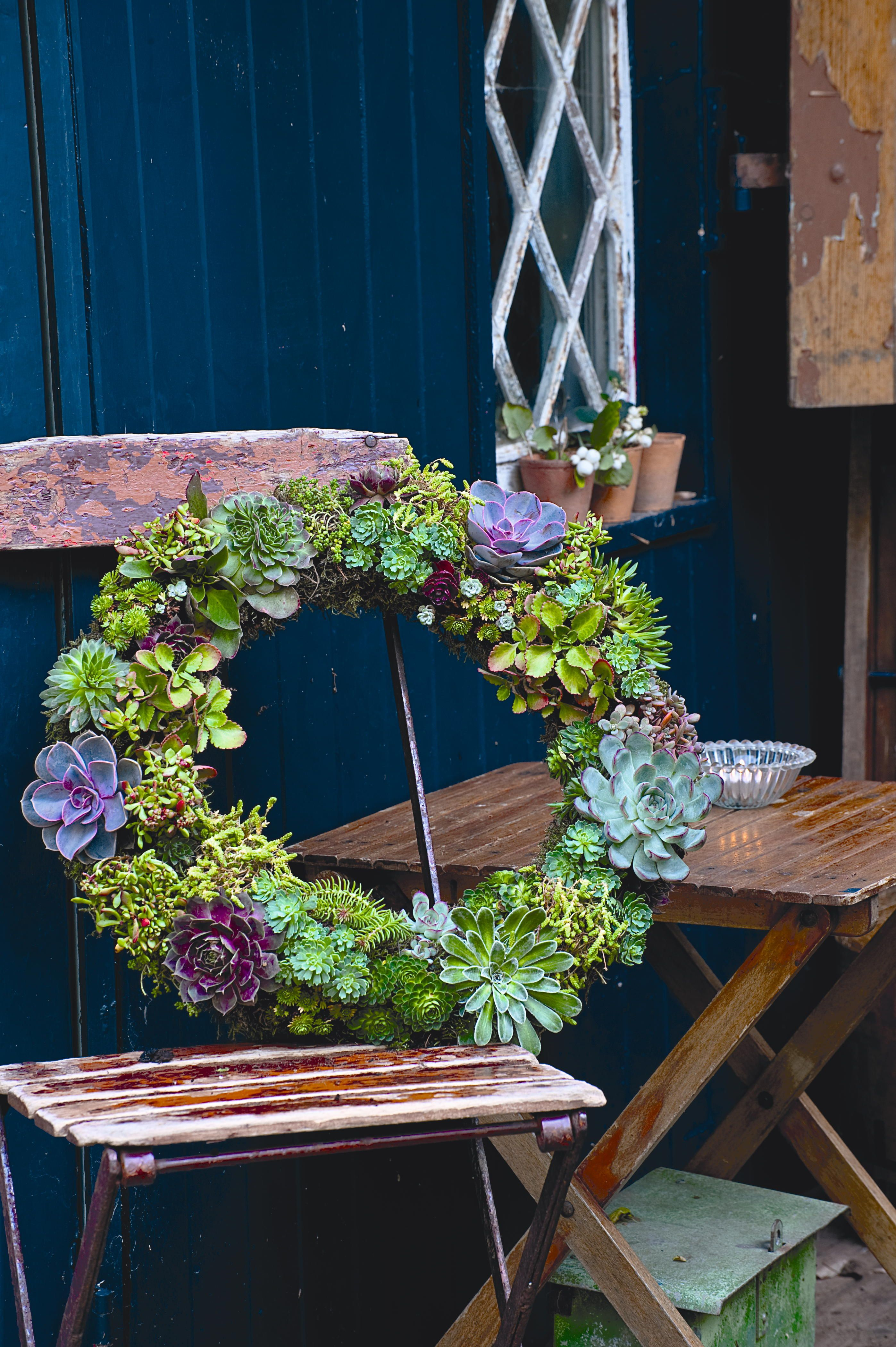 This living wreath needn\'t just be confined to Christmas decorations ...