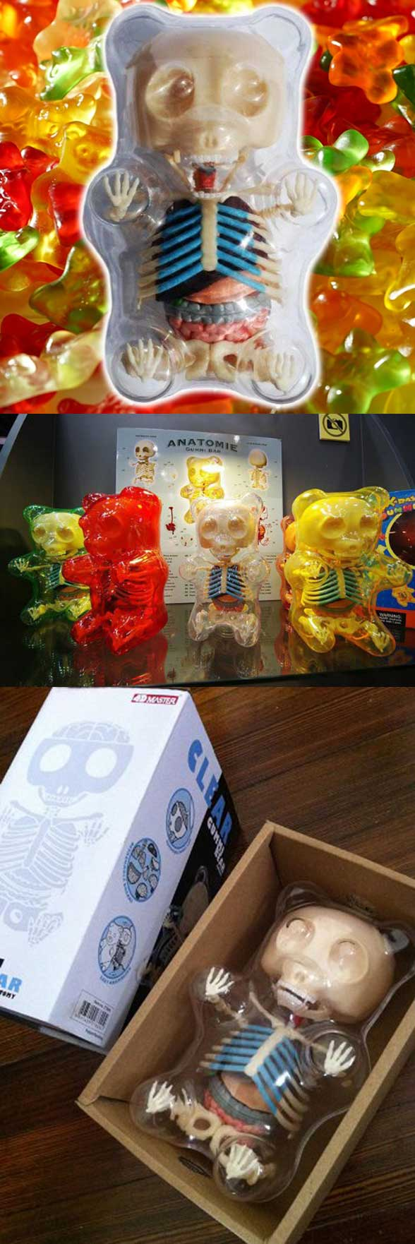 Gummi Bear Anatomy Model 4-D Puzzle -- Haven\'t you ever wondered ...