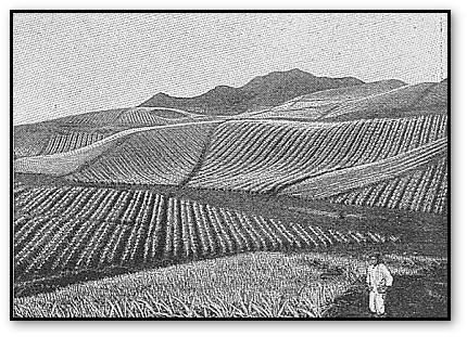 History of Hawaii 1923, Hawaii GenWeb