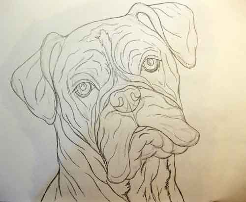 Gallery For Boxer Dog Head Drawing Boxers In 2018 Pinterest