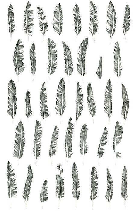 #feather #illustration