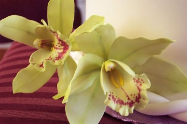 orchid sugar flowers ~ would like to make with clay