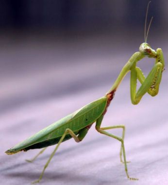 Pin By Silvia Chaparro On Stuff In 2020 Praying Mantis Amazing Nature Photos Insects