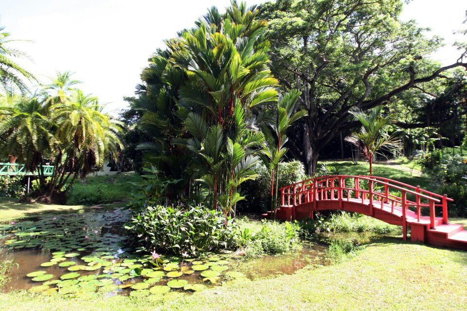 Jardin bot nico rio piedras puerto rico puerto rico for Jardin botanico san felipe