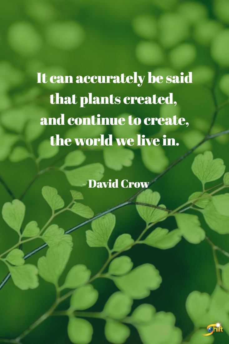 """It can accurately be said that plants created, and"