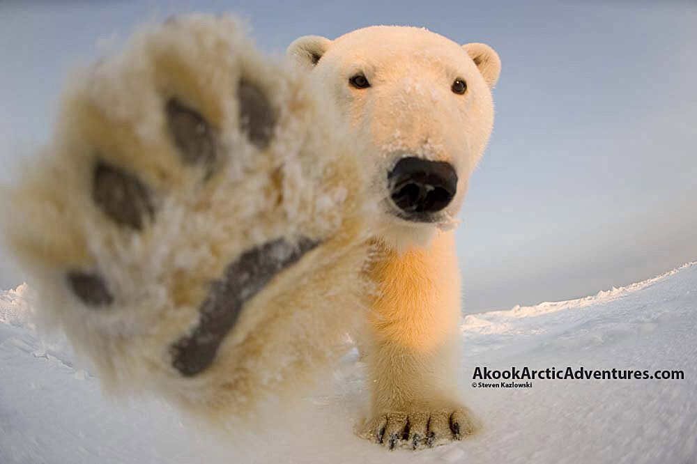 Pin On Alaskan Polar Bear Boat Tours