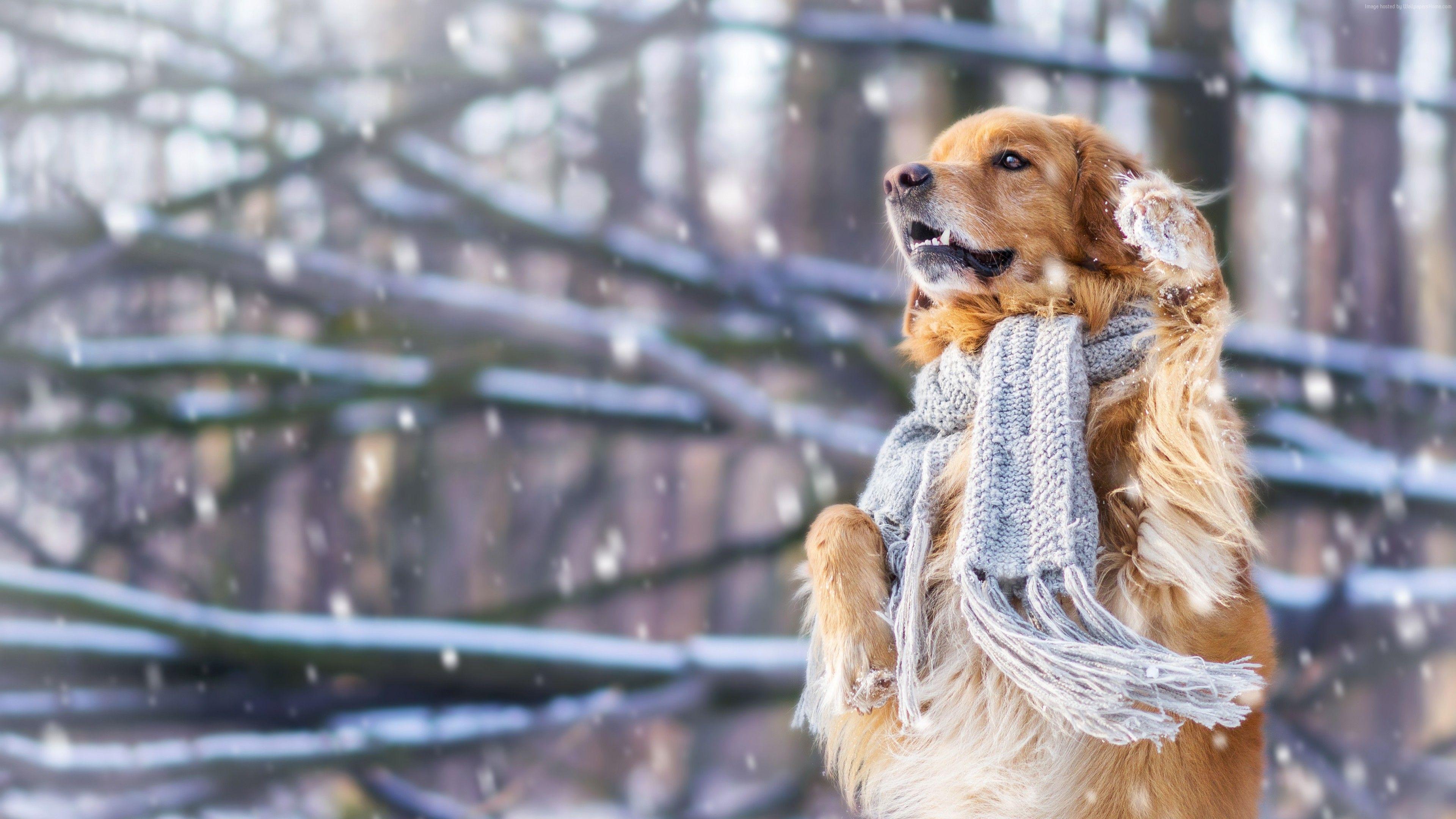 Wallpaper dog, cute animals, snow, winter, 4k, Animals