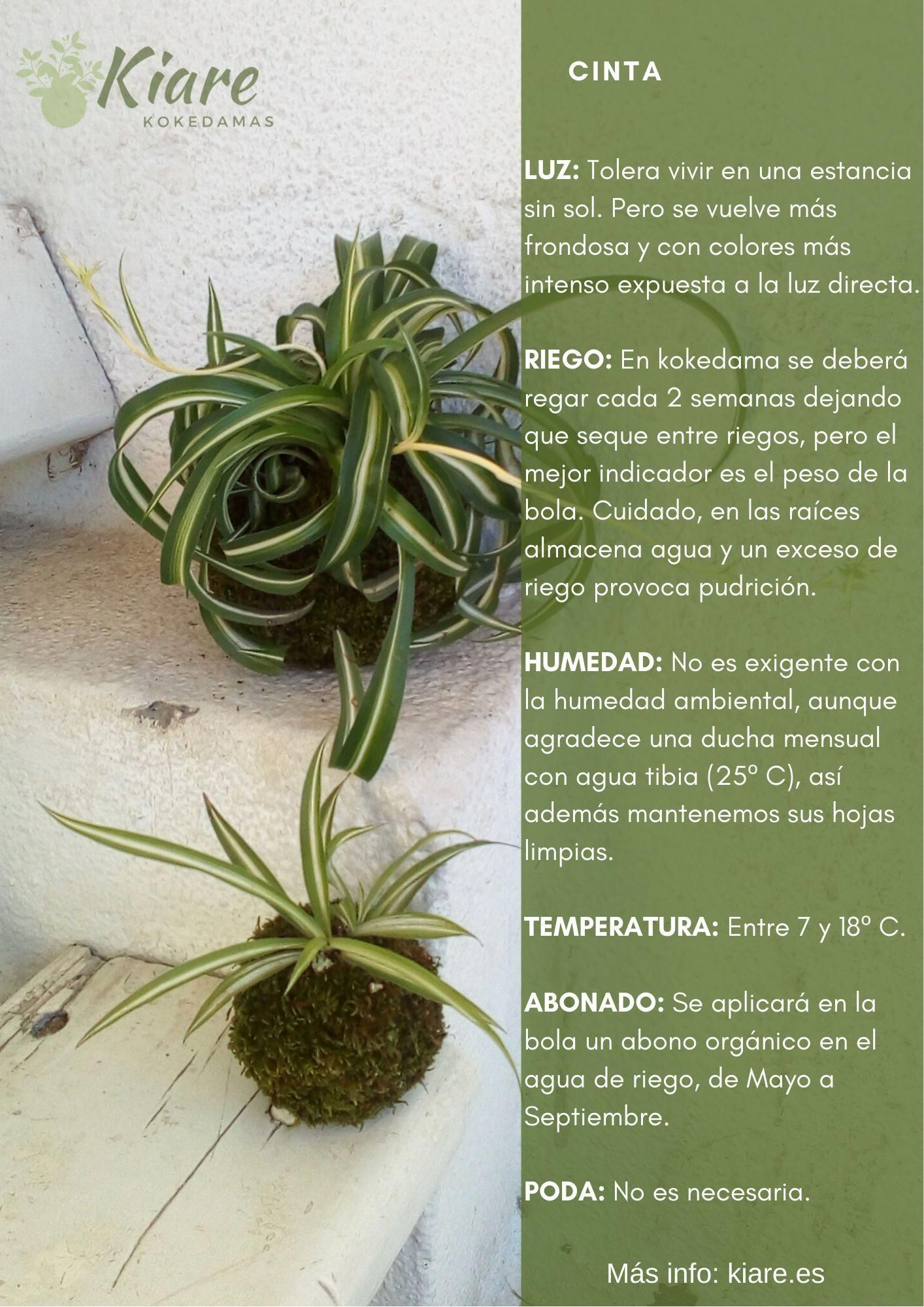 Decoracion De Jardines Y Terrazas In 2020 Propagating Plants Kokedama Plant Lover