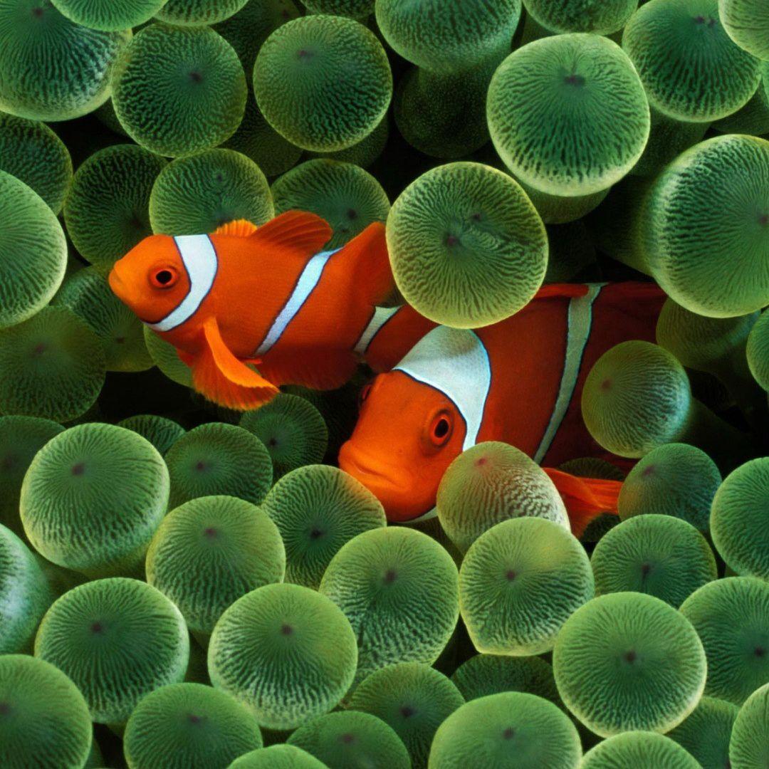 Resultado de imagen para peces tropicales | Caribbean and Tropical ...