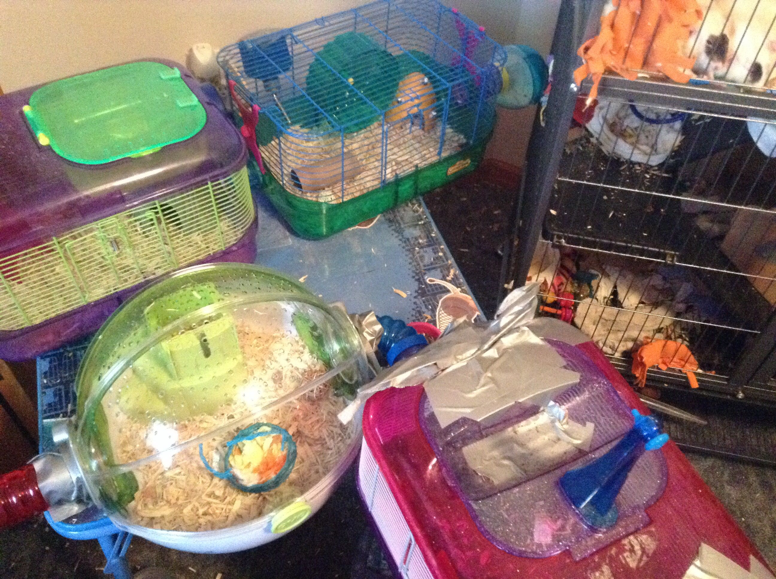 Crittertrail And Habitrail Ovo Mouse Cage Home To My Mice Oreo