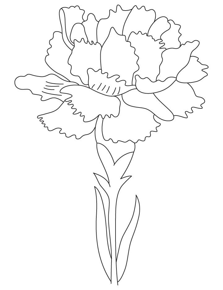 Carnation Birth Flower Coloring Page Things To Color