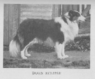Queen Victoria Collie Dog Collie Rough Collie