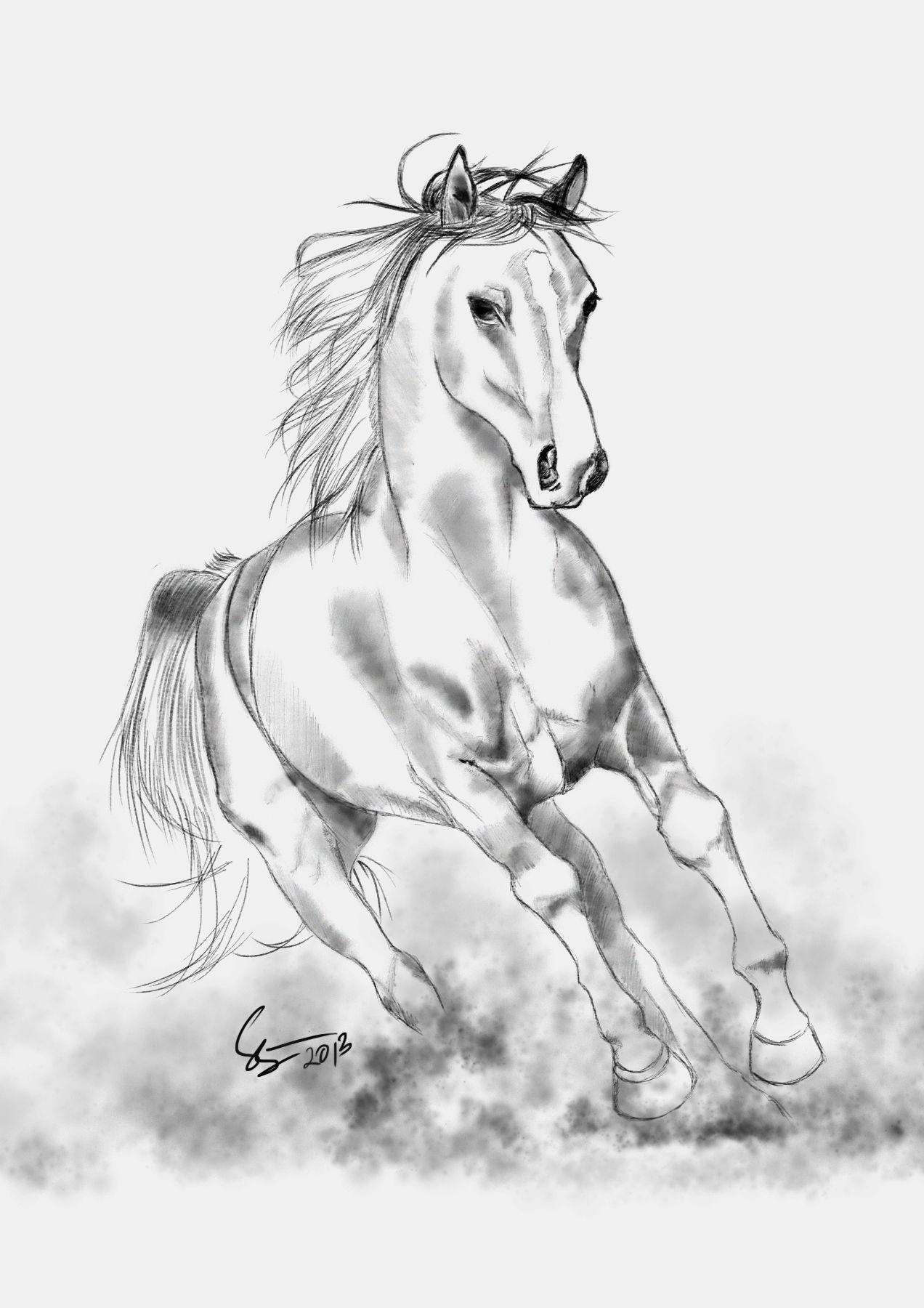 Horse Sketch Drawing Pencil Gambar Lukisan Seni Pensil