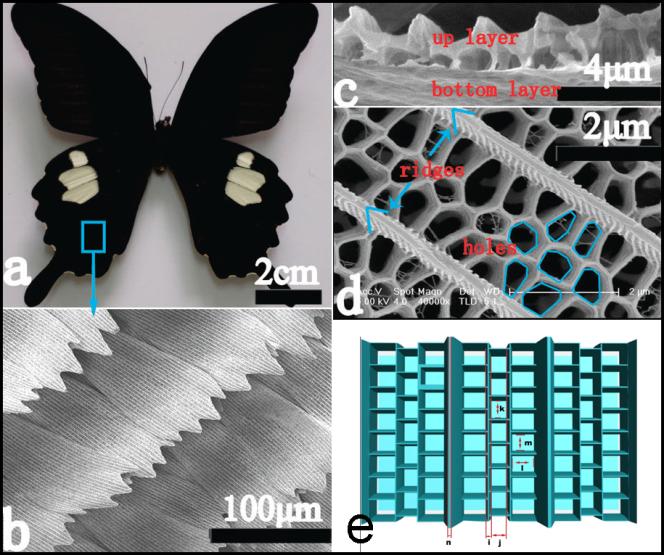 Butterfly wings are teaching scientists how to make better renewable fuels.