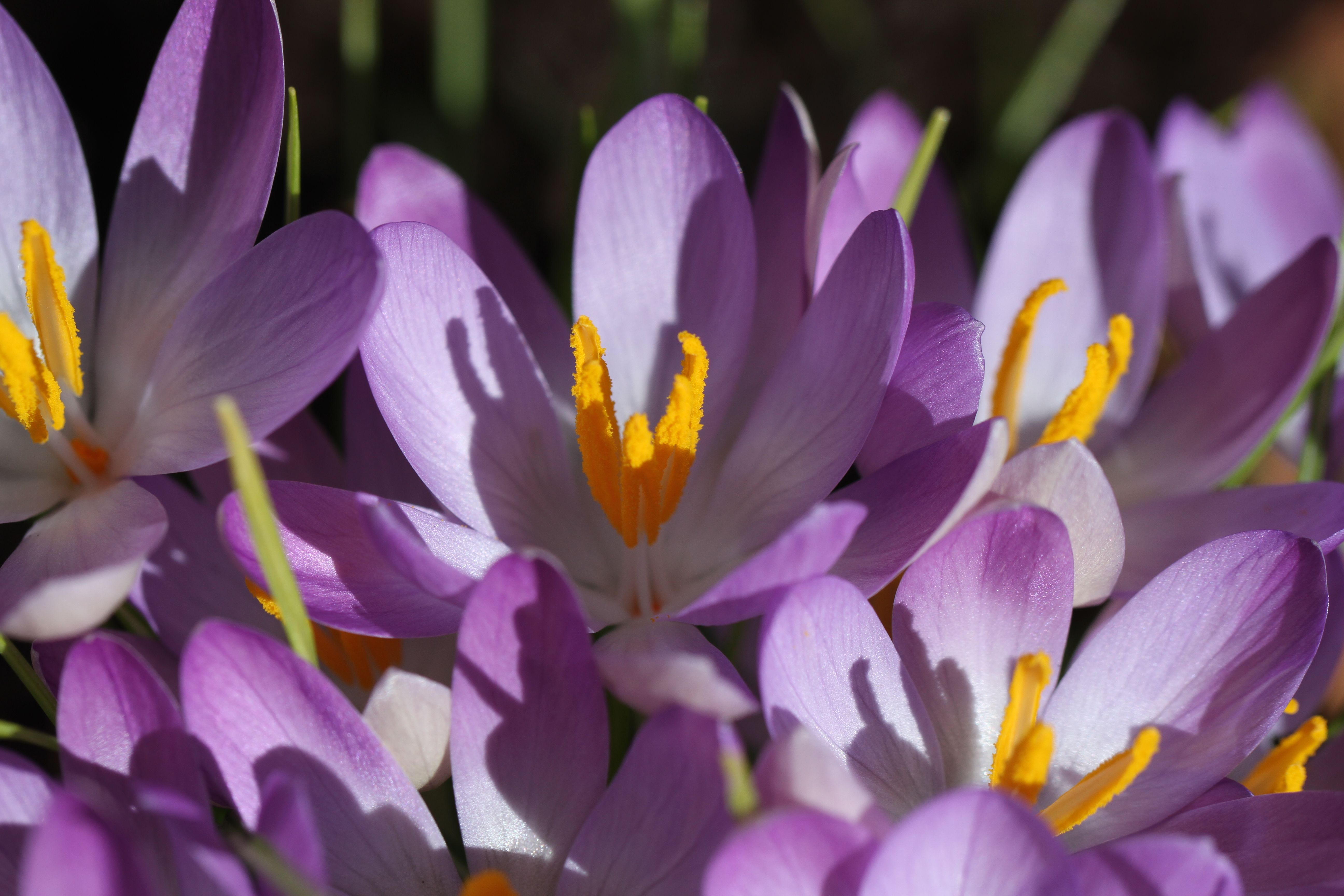 Can't wait till the crocuses bloom!