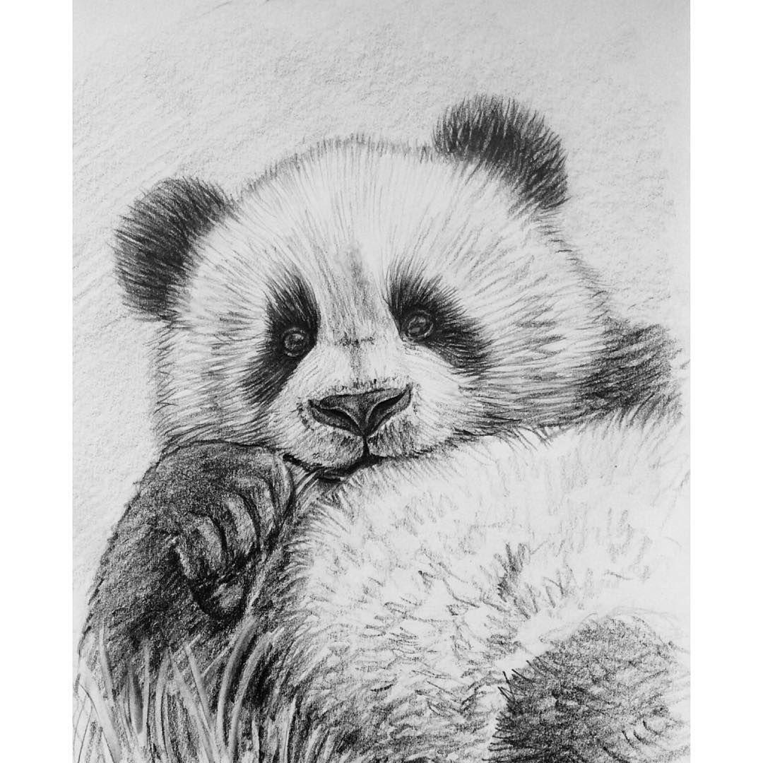 привлекает картинки графика карандашом панда для начинающих так