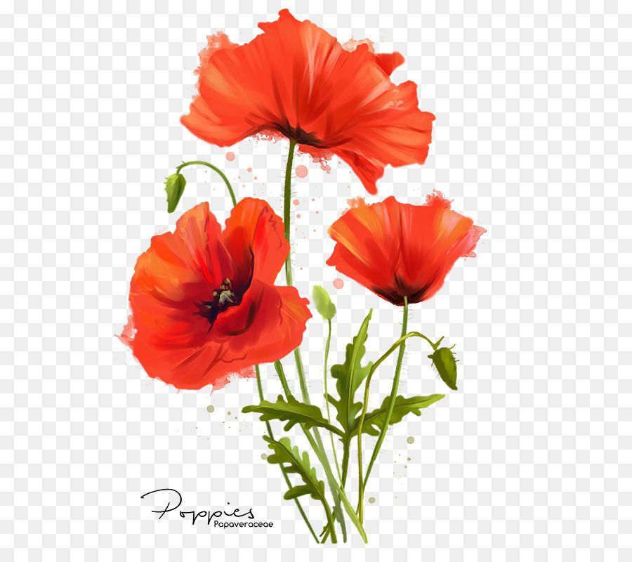 Pin By Henil On Henil Poppy Flower Drawing Flower Painting Flower Drawing