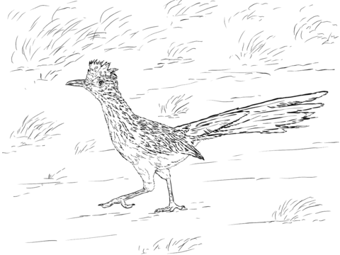 Realistic Greater Roadrunner Coloring Page From Roadrunner Category Select From 25887 Printab Desert Animals Coloring Zoo Animal Coloring Pages Desert Animals