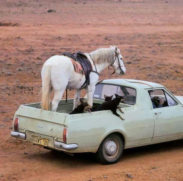 Holden Ute, Straya! ✮ www.pinterest.com/WhoLoves/Australia ✮ #Australia